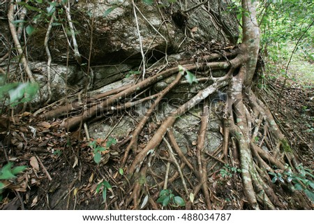 tree root texture background