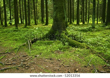 Tree, roots covered in moss #1 - stock photo