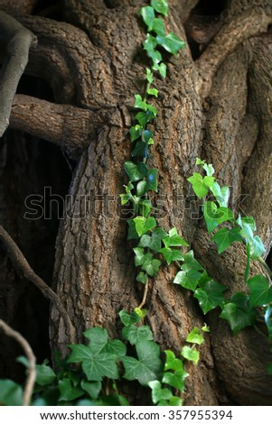 Tree roots covered with beautiful green branches of wild ivy creeper plant wildlife pretty natural decor background textured surface closeup copyspace, vertical picture - stock photo