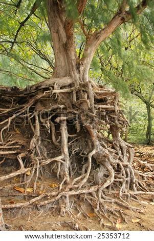 Lee prince 39 s portfolio on shutterstock for Soil erosion in hindi