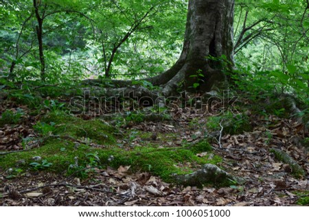 Tree roots on Forest Floor