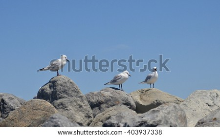 tree seagulls on rocks at Kaikoura, New Zealand