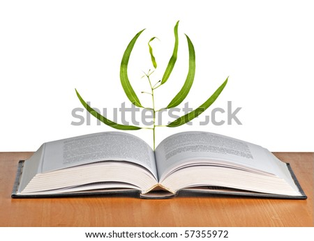 Tree seedling growing from an open book