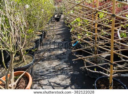 Tree Seedlings in garden centre, plant nursery - stock photo