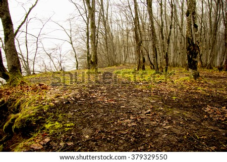 tree shadows in mountain forest with sunbeams. Sunset Sunrise In Autumn Coniferous Forest Trees. Nature Woods. - stock photo