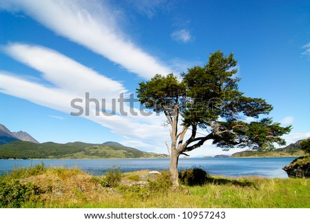 tree shaped by the wind in patagonia - stock photo