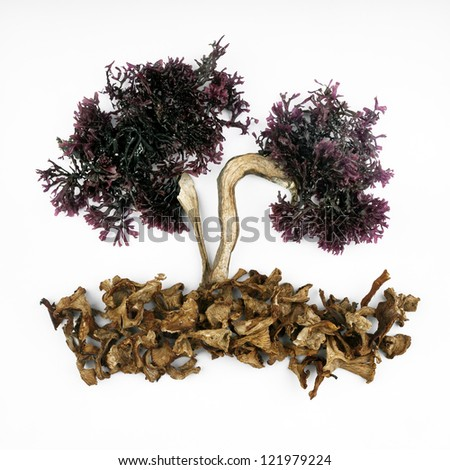 tree-shaped composition, fresh seaweed branches, and trunk and ground dried mushrooms on white background