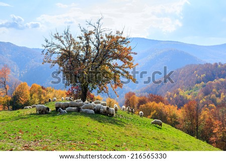 Tree, sheep, shepard dog in autumn landscape in the Romanian Carpathians - stock photo