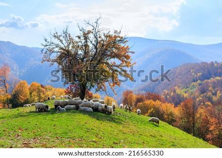 Tree, sheep, shepard dog in autumn landscape in the Romanian Carpathians - stock photo