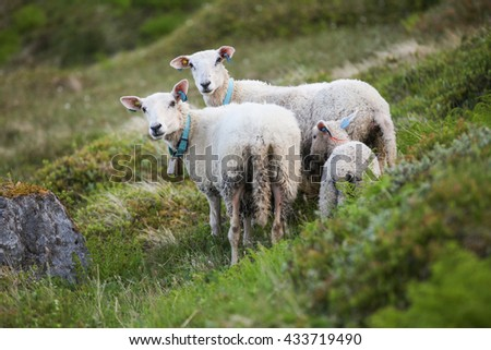 Tree sheeps in grass - stock photo