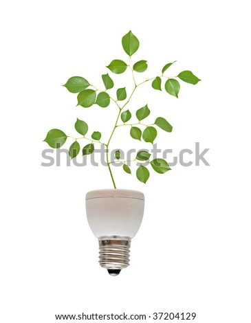 Tree shoot growing from base of fluorescent lamp