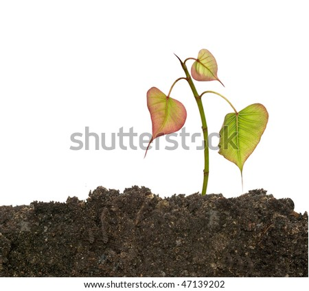 Tree shoot in soil isolated on white background