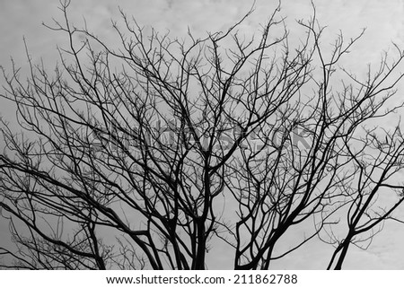 tree silhouette - stock photo