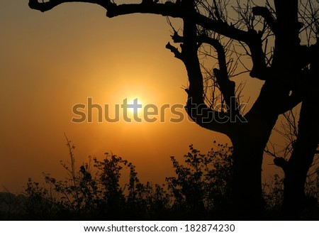 Tree, silhouette against sky in Kuakata, Bangladesh - stock photo