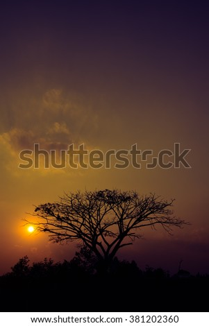 Tree silhouette and beautiful vibrant sunset  background - stock photo