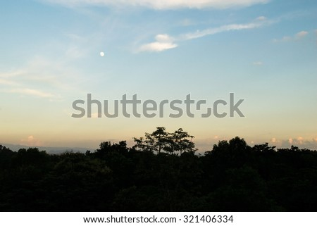 Tree silhouette and orange blue sky in evening time