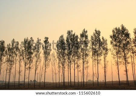 tree silhouette at sunset - stock photo