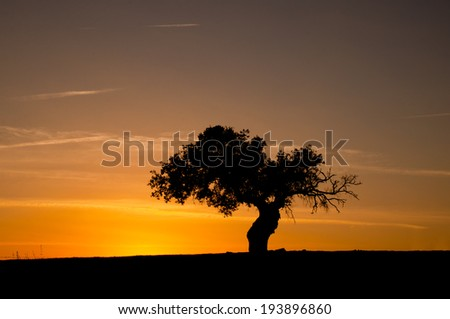 Tree silhouette at sunset with orange sky - stock photo