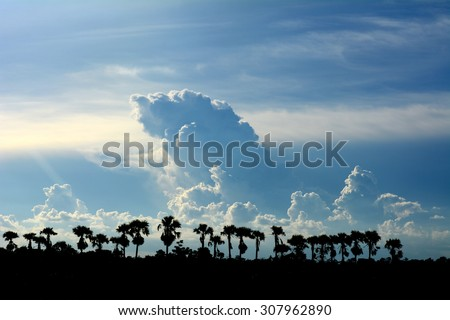 Tree silhouette background sunset. - stock photo
