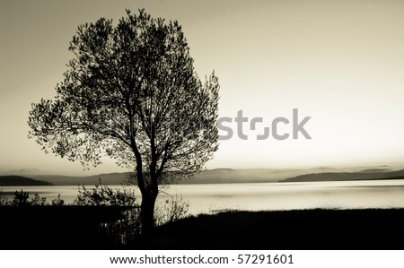 tree silhouette  black and white landscape