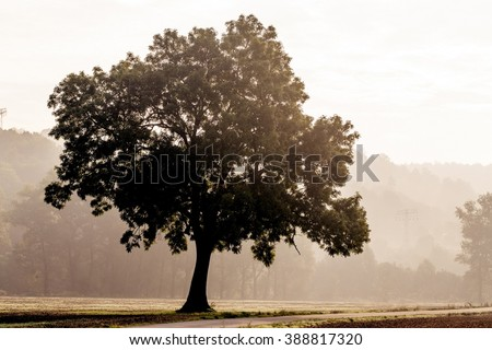 Tree silhouette in foggy morning - stock photo
