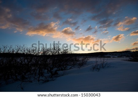 Tree Silhouette on Blue Sky with Snow - stock photo