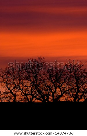 Tree Silhouette on Orange Clouds - stock photo