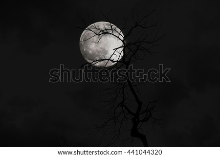 Tree silhouette with moon - stock photo