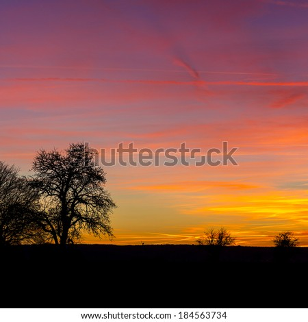 tree silhouette with warm sunset summer orange sunrise