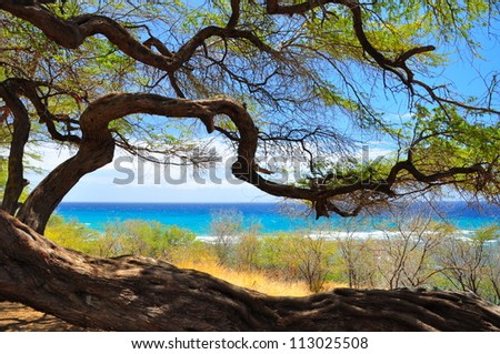 Tree silhouetted against blue ocean - stock photo