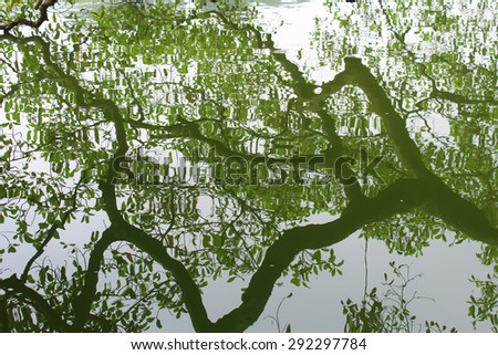 tree silhouetted against the lake - stock photo
