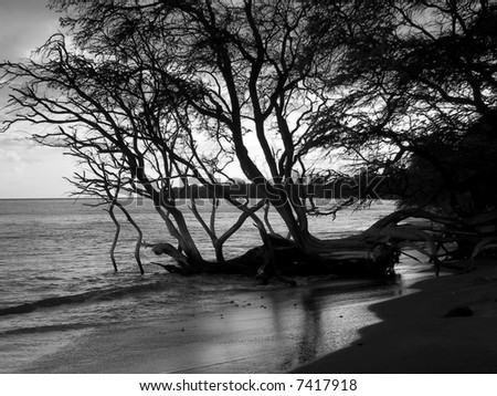 tree silhouetted on maui beach - stock photo
