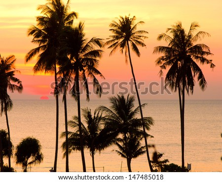 Tree Silhouettes Bay View  - stock photo