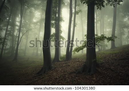 tree silhouettes in dark forest - stock photo