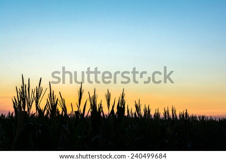 tree silhouettes with the sky in the evening - stock photo