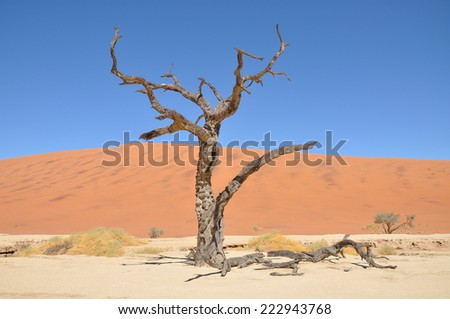tree skeleton at Deadvlei near Sossusvlei, Namibia - stock photo