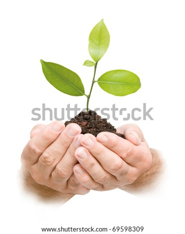 Tree sprout in hands