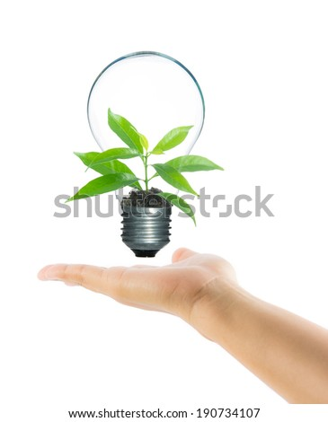 Tree sprout inside lamp light bulb on hand isolate on over white background