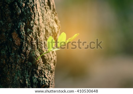 Tree sprout with sunlight. - stock photo