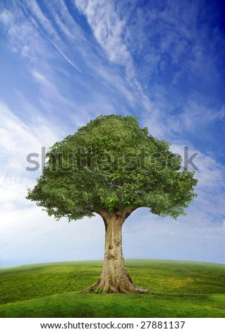 Tree standing alone in a field over blue sky, fish eye lens horizon