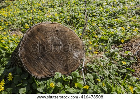 Tree stump closeup. Yellow flowers background. Cutting down trees. Environmental problem concept. - stock photo
