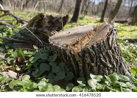 Tree stump on the green grass. Cutting down trees. Environmental problem concept - stock photo
