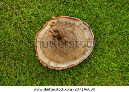 tree stump on the green grass, top view - stock photo