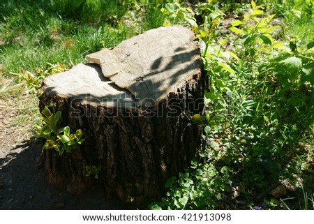 Tree stump on the green grass. Young little trees growing in a stump - stock photo