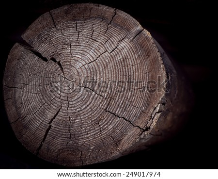 Tree stump with annual rings on dark background. Selective focus. - stock photo