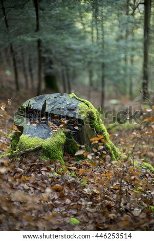 Tree stump with blurry background in the forest