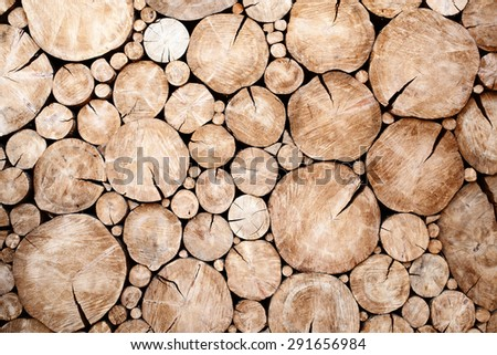 tree stumps background Trees cut section Wood texture of cute tree trunk - stock photo