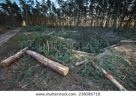 Tree Stumps in a Clearcut Area