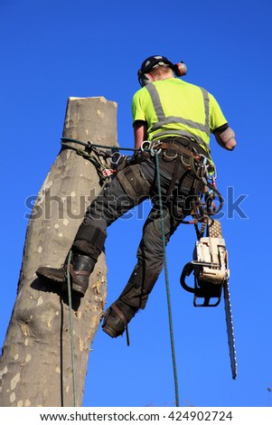 Tree surgeon lumberjack with a chainsaw in a harness, abseiling while cutting down a tree - stock photo