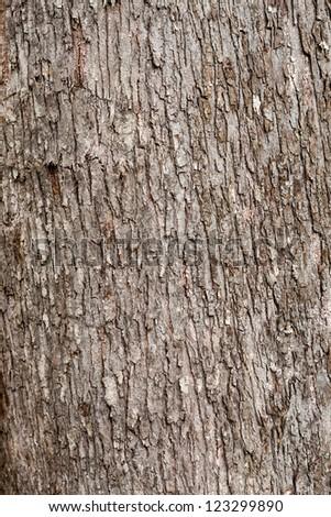 Tree texture. - stock photo